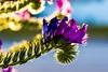 Le printemps 2018 de retour. (Bouhsina Photography) Tags: printemps fleur macro canon couleur 2018 bouhsina bouhsinaphotography 7dii tétouan maroc sauvage lumière