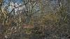 20180402_163720_g (wos---art) Tags: bildschichten wald sträucher bäume äste fusweg wildwuchs natur natürlich gewachsen