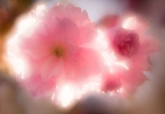 Blossom3 (DS Williams) Tags: worcester worcestershire varisoft rokkorvarisoft