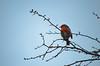 Robin (revolution540) Tags: robin red bird tree blue orange animal nikon d5100 depth field real nature natural birds small erithacus rubecula alive