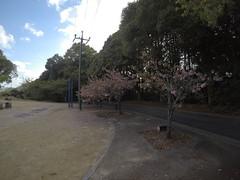 Rest area trees (Hazbones) Tags: iwakuni yamaguchi yokoyama castle kikkawa suo chugoku mori honmaru ninomaru demaru wall armor samurai spear teppo gun matchlock map ropeway