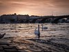 Sonnenuntergang an der Moldau in Prag (Ina Hain) Tags: olympus sightseeing fluss river water wasser brücken sonnenuntergang swan schwan ufer moldau prag