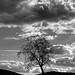 Lone Tree, Glen Almond