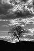 Lone Tree, Glen Almond (ShinyPhotoScotland) Tags: nature art composition balance places scotland contrasts landscape rawconversion dcraw light manipulated composite enfuse lightanddark photography equipment camera sunlight brightsunlight skyearth hdr pentaxk1 lens pentax28105mm emotion crazyart intimatelandscape flora trees digikam perthshire numbers toned monochrome blackandwhite pure elegance shapely simple sky clouds cloudappreciation awe contrejour appreciation amazement striking dramatic beautiful zen idyll moment imposing serifaffinityphoto moody airy raw turbulence drama transience one simplecomplex stark glenalmond unitedkingdom gbr