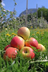 Who likes apples? (Tomek Sz) Tags: apples fruits dolomiti dolomites mountains spring green blue red yellow white sky nature health
