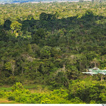 Sobre a selva. thumbnail