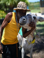 A Likkel Kiss Fi Mi Donkey,Mon! (Poocher7) Tags: jamaica westindies carribean donkey portrait people male jamaican kiss affection animal cross reggaebelt yellowbodyshirt palmleafhat hat jamaicanflag beard love adorable cute gla kissing tendermoment