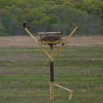 Osprey on their new platform thumbnail