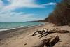 Remote Toronto Beach (dunescape) Tags: lakeontario toronto beach spring driftwood