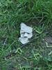 Found Paper Face (mkorsakov) Tags: münster city innenstadt foundface papier paper baumscheibe