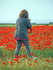 Campo de Amapolas   (20) (eb3alfmiguel) Tags: campos rojo amapolas