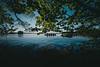 boat trip   l  2018 (weddelbrooklyn) Tags: schleswigholstein plön plönersee prinzeninsel boot bootsfahrt kanu paddeln wasser frühling sommer urlaub abenteuer nikon d5200 lake lakeview nature landscapes boat boattrip paddeling water summer spring adventure holidays natur landschaft