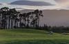 Evening at Drumashie. (Gordie Broon.) Tags: drumashiefarm essich thegreatglen glenalbyn field landscape scottishhighlands scotland scenery schottland paisaje ecosse scenic sheep pines escocia hugeln collines silhouettes colinas glenmor caledonia sky clouds scozia szkocja heuvels gordiebroonphotography paysage invernessshire eveninglight inverness sonya7rmkii ilce7rm2 sonyepz18105f4gosslens alba ashiemoor landschaft 2018 geddies northernscotland geotagged