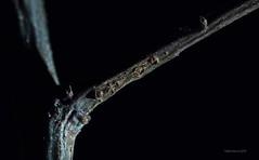 A bough in the night (Yberle.Foto) Tags: lowkey black mostlyblack branch branchlet macromondays