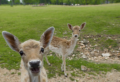 hello (Alex Szymanek) Tags: hello greetings friends new happy soup for soul planet earth nature animal animals deer chill quiet karma clear day simple eyes mood come conversation sound vision green wild landscape friendly contact warm spring 2018 14mm