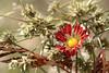 Entre  reflejos verdes y dorados (leograttoni) Tags: naturaleza nature flor flower crisantemo otoño autumn laplata buenosaires macrofotografía