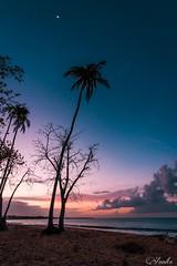 Sea, sand, sunset colors by the moon (Annalyn Díaz) Tags: sea beach beachsunset sunsetcolors palmtrees moon beachphotography