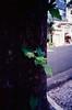 .. (Celso Kuwajima) Tags: leaves tree 20180437 street sprout leicam4 leicasuperangulon13421mm analogphotography outdoor kodakektar100 sãopaulo brazil br bokeh epsonv800 silverfastai