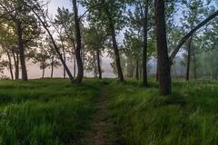 A foggy morning at the lake. (mnryno) Tags: trail forest lake trees sunrise fog colorado cherrycreek