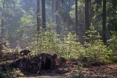 180520_020 (123_456) Tags: parkdehogeveluwe hoge veluwe nederland gelderland otterlo hoenderloo schaarsbergen