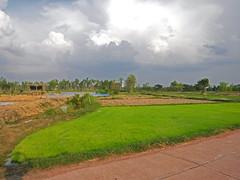 Storm over Paddies (SierraSunrise) Tags: isaan esarn thailand phonphisai nongkhai weather storm clouds evening farming agriculture ricepaddy ricepaddies paddyrice grain green