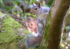 Squirrel on a tree (Tony Worrall) Tags: britain english british gb capture buy stock sell sale outside outdoors caught photo shoot shot picture captured nature wildlife wild outdoor beauty nice lovely natural life summer seasonal scarborough england regional region area northern uk update place location north visit county attraction open stream tour country welovethenorth squirrel beast animal tree cute climb