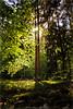 Der Wald steht schwarz und schweiget (Peter Daum 69) Tags: tree sonne sun licht light abend evening landscape scenery landschaft sunset sonnenuntergang farbe color canon eos photoart fotografie photographer forest moos dream