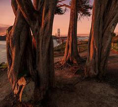 Story tellers.... (reinaroundtheglobe) Tags: sanfrancisco california usa landscape goldengatebridge sunlight dawn nopeople fullframe framing trees moody pinetrees colorful