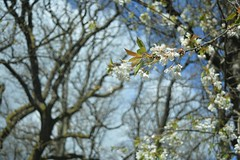 DSC_0263 (KYLee96) Tags: lakedistrict lake unitedkingdom greatbritain countryside nationalpark lightblue sky sunny sunshine scenic scenary landscape blue trees plant flower white