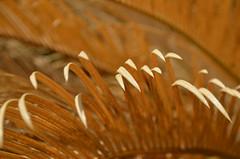 (diletta111) Tags: foglie oro giallo colors