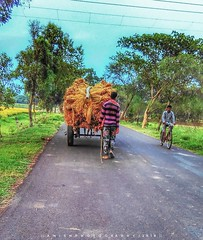 PULLING PADDY ON A DUNLOP CART...... (anishmangal) Tags: village paddy photography india icc