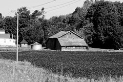Barn (joeldinda) Tags: farmyard building barn soybeans 2016 tree fields michigan eatoncounty charlotte august house poles 3229 nikond500 bw blackandwhite d500 nikon monochrome