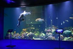 Wonders of Wildlfie National Museum and Aquarium (Adventurer Dustin Holmes) Tags: 2018 wondersofwildlife saltwater aquarium sharktank fish animals aquatic wall springfieldmo springfieldmissouri greenecounty missouri