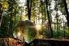 Crystalball sunset 🌅 (bastian90) Tags: outdoors woods nature natur wald forest glaskugel crystalball sonnenuntergang sunset