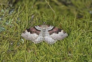 Flame Carpet, Burntisland, Fife, Scotland