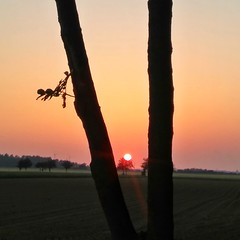 Embedded... (eikeblogg) Tags: sunsets mobilephotography creative inspiring landscapeshots moods eveninglight may eifel rural countryside atardeceres coucherdusoleil paisaje paysage germany ngc