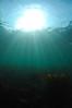 ScotlandWest-201804-Oban-AulistonPt-11-Sunburst (Tony J Gilbert) Tags: wwwlochalineboatscouk scotland scubadiving marine diving marinefish nikond300 60mmlens 105mmlens underwater underwaterphotography travel travelogue scottishtravel scottishscubadiving scottishlandscapes scottishwildlife