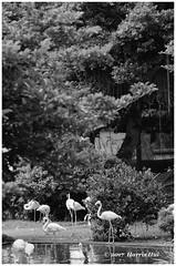 Textures And Shapes - Hong Kong XT5798e (Harris Hui (in search of light)) Tags: harrishui fujixt1 digitalmirrorlesscamera fuji fujifilm vancouver richmond bc canada vancouverdslrshooter mirrorless fujixambassador xt1 fujixcamera fujixseries fujix fujixf55200mm fujizoomlens bw blackwhite monochrome hongkong hk kowloonpark kowloonparkaviary aviary textures shapes
