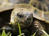 Reptiel ganz nah (siegmarkälberer) Tags: schildkröte tiere natur reptiel