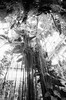 National Botanical gardens (corbett.smithson) Tags: botanicalgardens ilford3200 ilford nikonf4