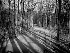 The Path 1 (Jeffery Womack) Tags: dramaticmonochrome 2018earylyspring monochrome smartphonephotography forestpathway nature water mayburystatepark blackandwhite trees samsunggalaxy8plus hikingtrails novi michigan