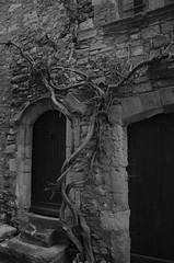 Aiguèze     0704BW (davidbruyere34) Tags: aiguèze village ancien noiretblanc bw vieux bâtiment arbre architecture