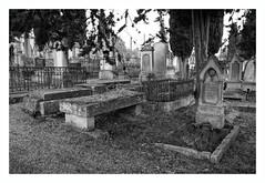Fin de parcours... (Esteban 86360) Tags: cimetière cimetiere cimetery simetier tombe death mort noir blanc black grey gris paysage urbex urban urbain ville town arbre triste décès décédé decede deces vie life end fin