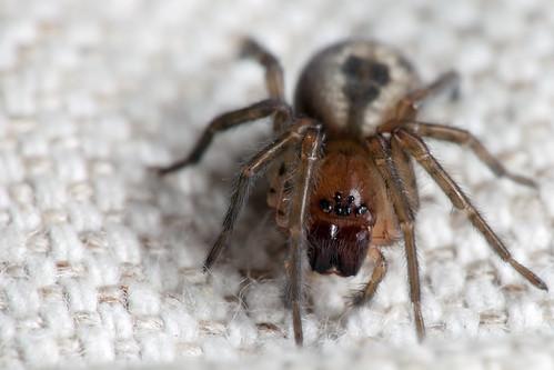 Crouching Spider, pt. 2 -  _TNY_2412