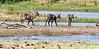 Three young waterbuck (Johann (Sasolburg, RSA.)) Tags: waterbuck waterbok letshalink pilanesberg makemesmile ef70300mmf456isusm canoneos7dmarkii johanndejager antelope wildlife kobusellipsiprymnus scenery bovidae coth coth5