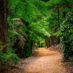 Into the Forest (Scottmh) Tags: 2028 alfred anzac australia autumn d7100 dandenong day garden melbourne nicholas nikon ranges victoria square crop