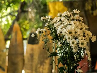 Father's Cacimba Beach - Fernando de Noronha/PE - flowers