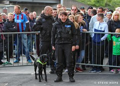 Dog handler (SteveH1972) Tags: canon700d canon 700d doghandler rotherham rotherhamunited uniform people person newyorkstadium stadium outside outdoor outdoors 2018 leagueoneplayoffs playoffs leagueone southyorkshire yorkshire england uk britain northernengland canon70200lf28usm 70200 canon70200nonis canon70200usml28nonis nonis dog