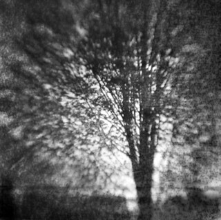A Backyard Tree
