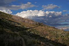 DSC01054 (kyleddsn) Tags: hiking utah ogden spring